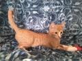 spider-cat4