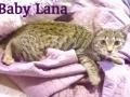Lana 02b