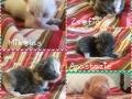 Faerie-Misha Kittens 07