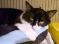 tomcat-waits2