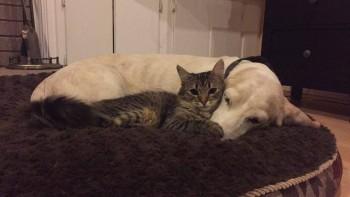 kahlua-with-dog