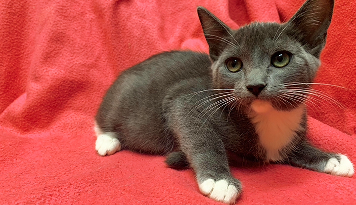 Elektra – Young Female – Available for Pre-Adoption